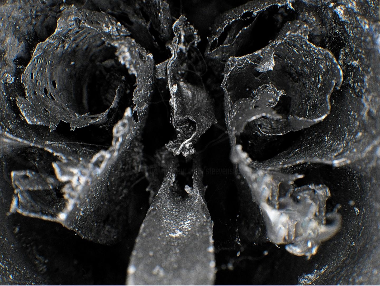 Steevens Hill - Skull Vision