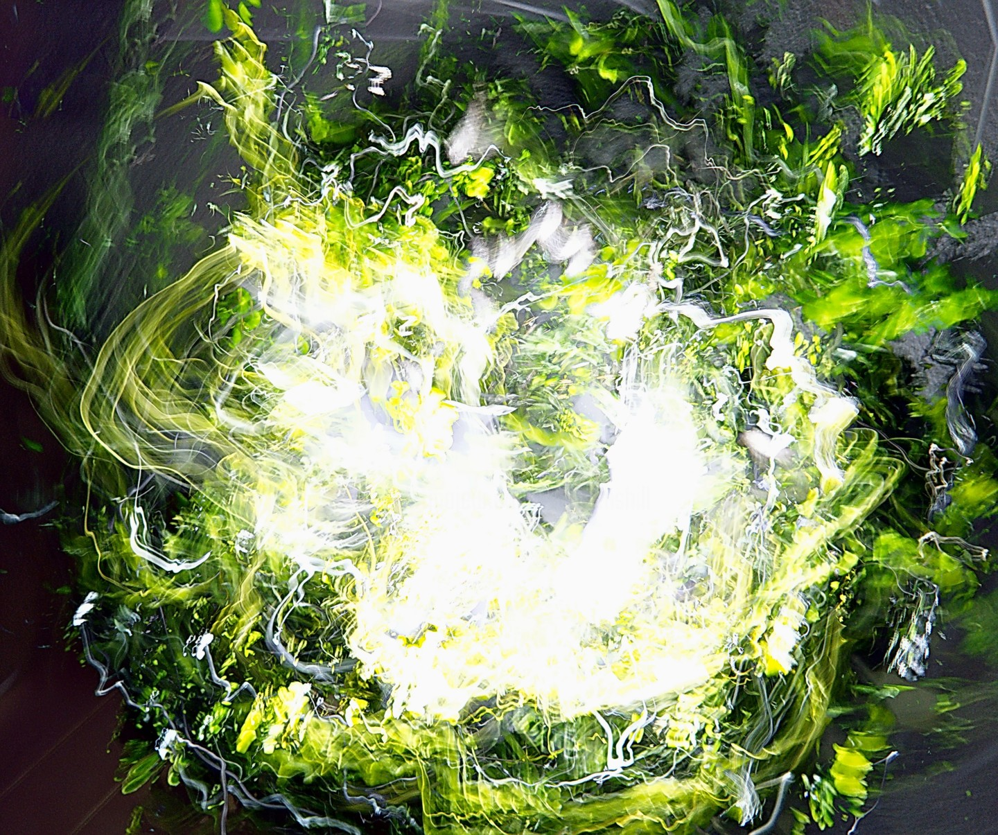 Steevens Hill - Chlorophyll Explosion
