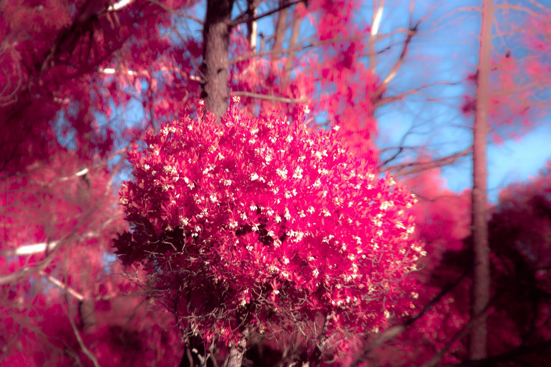 Steevens Hill - Bouquet
