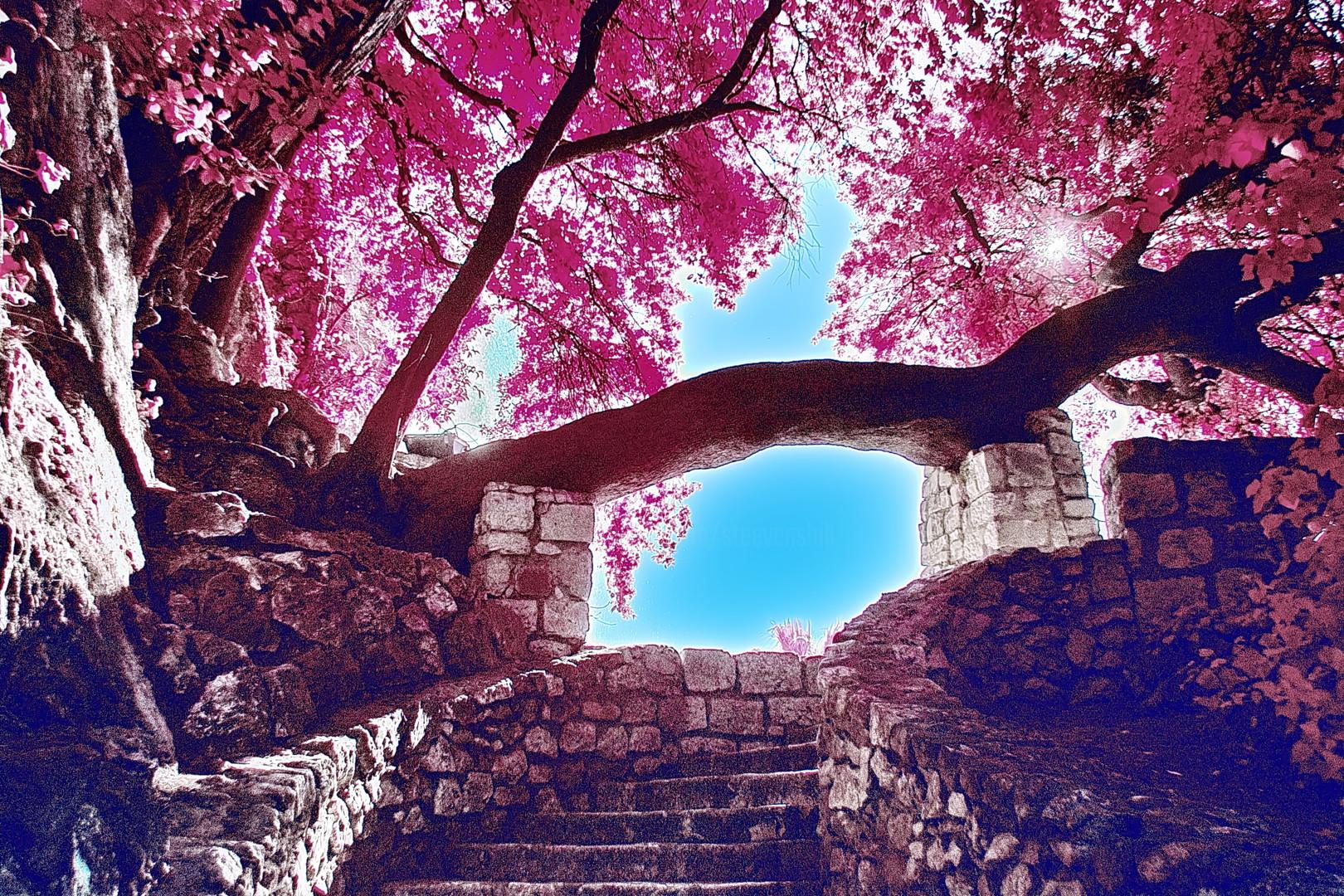 Steevens Hill - Arche de vie