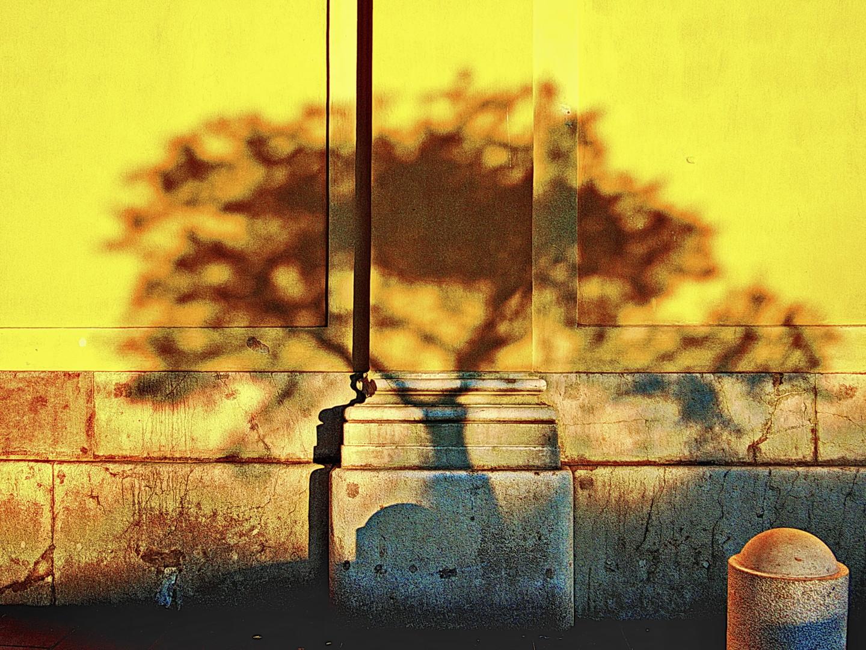 Steevens Hill - Wall Transfer