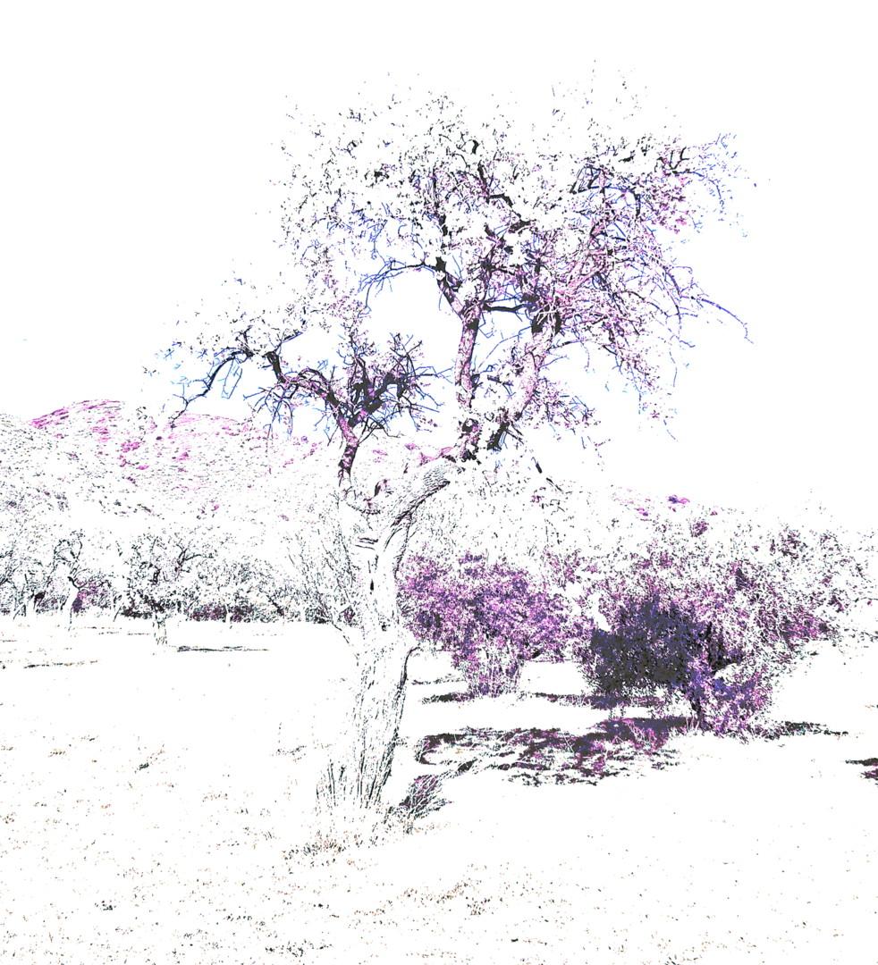 Steevens Hill - HighKey Tree Presence