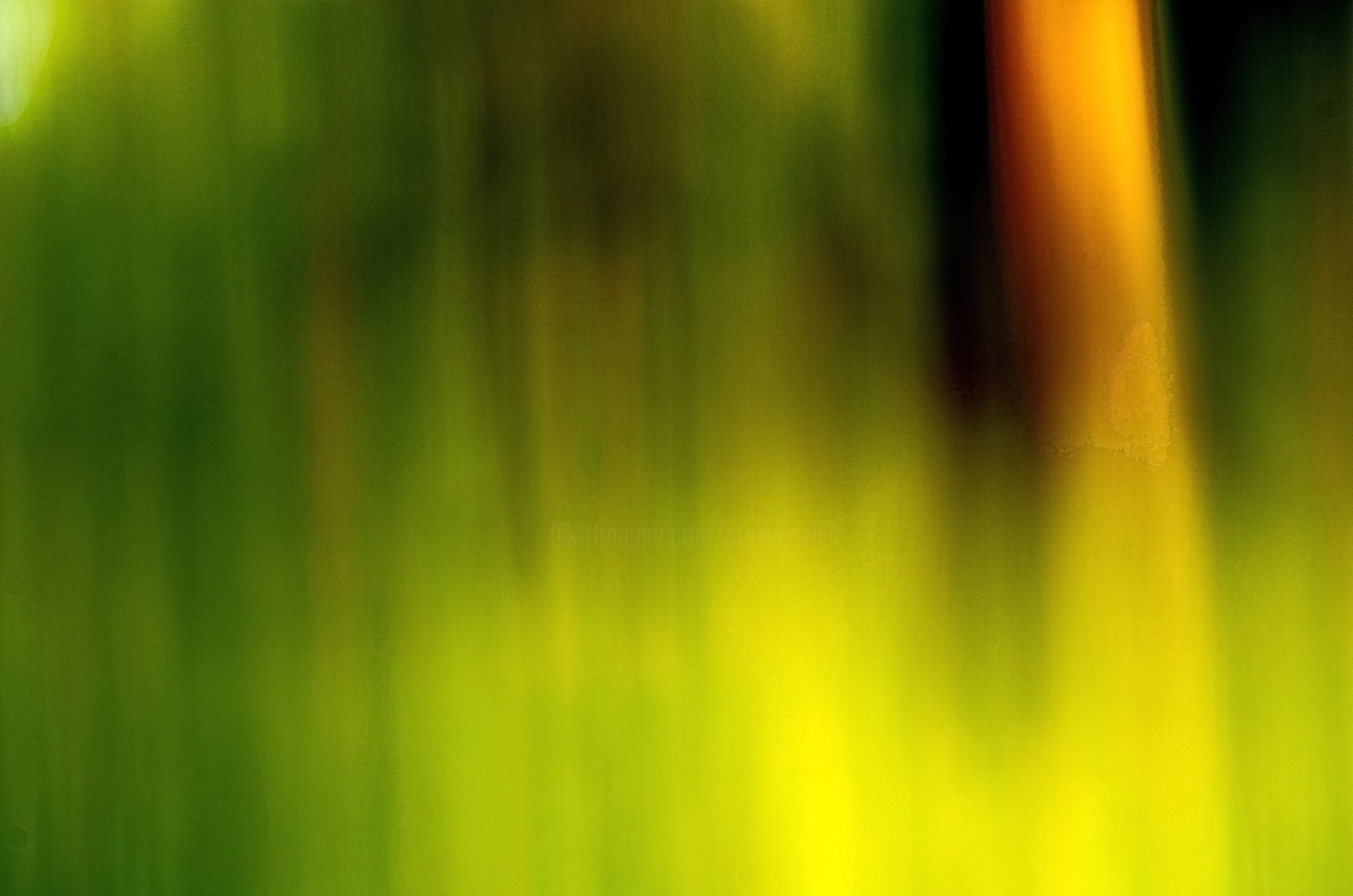 Steevens Hill - Pictorial Vegetal