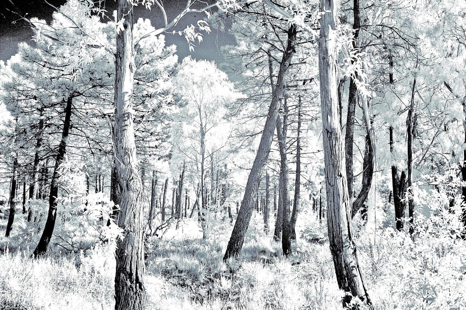 Steevens Hill - Ikey Infra Wood