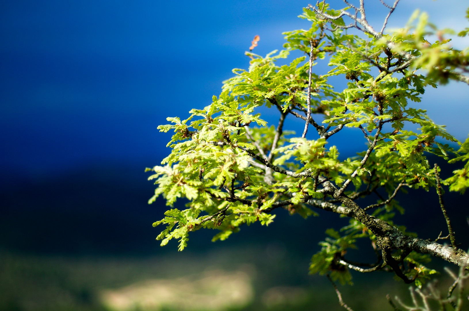 Steevens Hill - Green on Blue