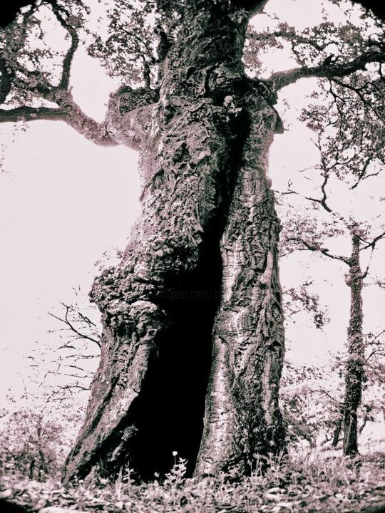 Steevens Hill - Tree's Darkness